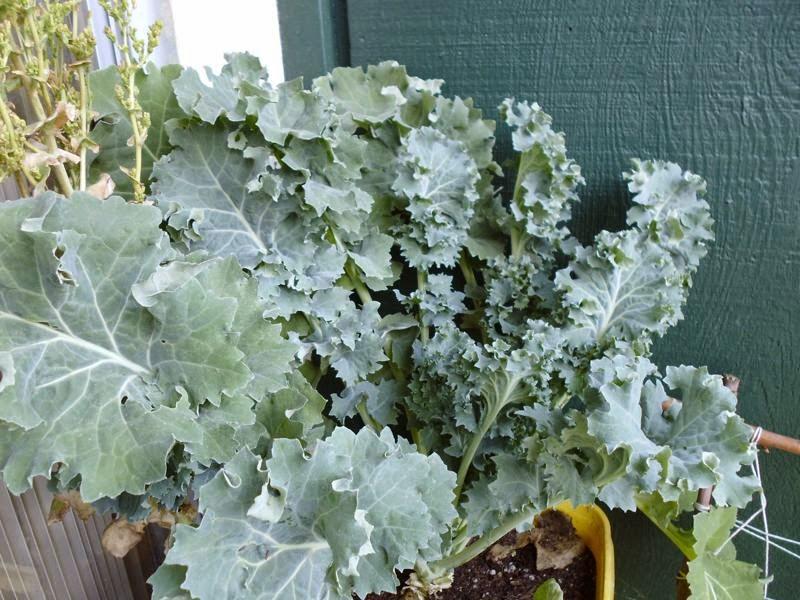 Wow Kale