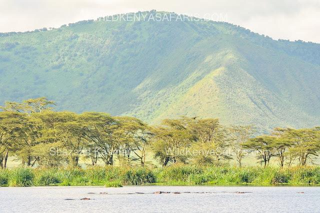 Tanzania Safaris, Ngorongoro Crater, Hippo's, Safari Tanzania, Wild Kenya Safaris, www.wildkenyasafaris.com, Shazaad Kasmani, Safaris Arusha, Ngorongoro Safari