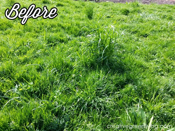 non-toxic way to kill grass