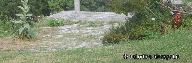 Gallina Modenese, Upupa, Birdwatching, Fattoria Didattica, confetture, oleoliti, sali aromatici, lavanda, erbe officinali e spontanee, percorsi olfattivi, ghirlande floreali.