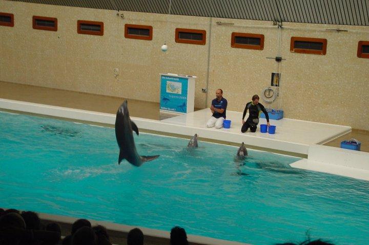Nuremberg Zoo and Dolphin Lagoon 3