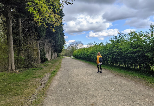 Watergate Forest Park - Dog-Friendly Nature Walk & Cafe