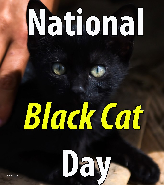 National Black Cat Day Wishes