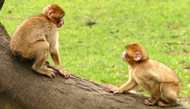 Comportamentos homossexuais já foram demonstrados em 1.500 espécies animais