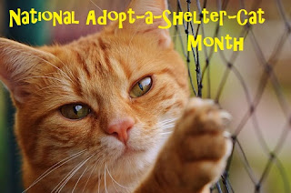 National Adopt-a-Shelter-Cat Month banner