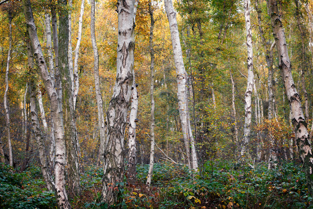 Natural England nature reserve at Holme Fen in the autumn