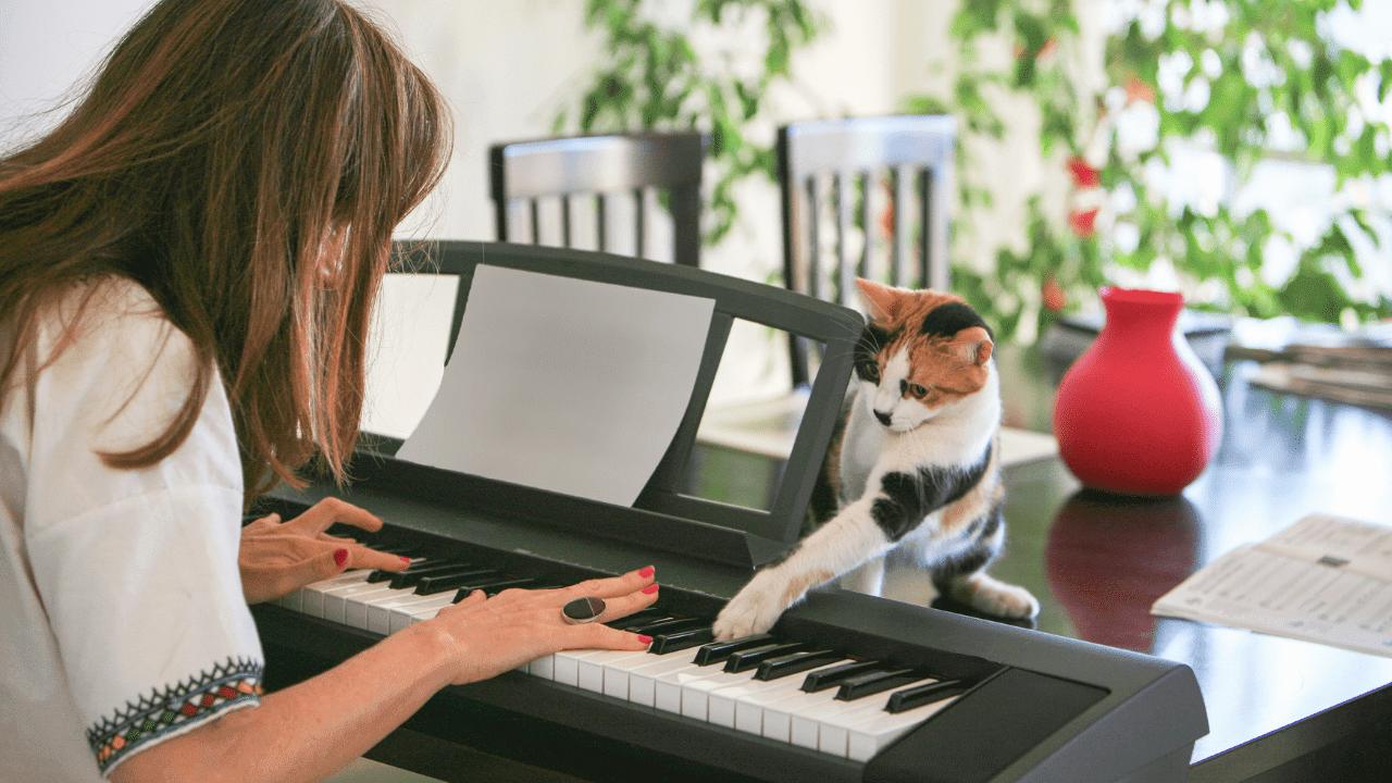 gatitos tocando el piano con una mujer asiatica