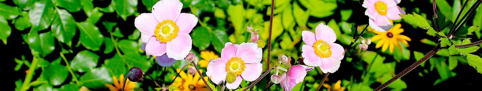 Цветы Святой Земли.
