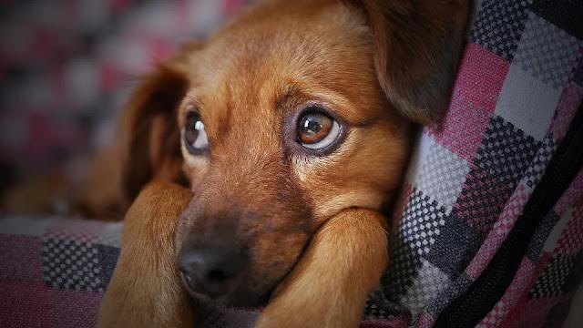 Perros pueden entender palabras pronunciadas por desconocidos.