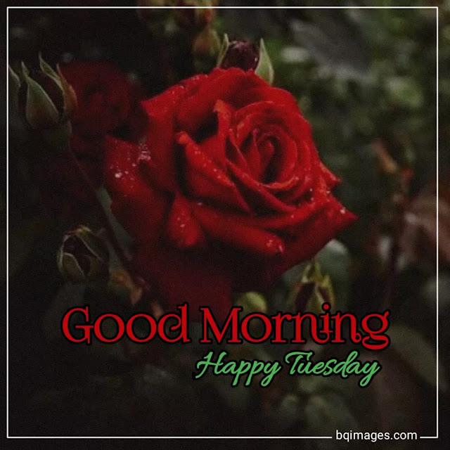 free good morning tuesday images