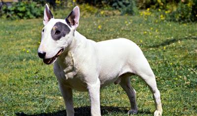 dünyanın en büyük köpek cinsleri nelerdir,büyük köpek cinsleri nelerdir, köpek cinsleri nelerdir?,en iyi köpek cinsleri nelerdir,türk köpek cinsleri nelerdir, iskoç köpek cinsleri nelerdir,çin köpek cinsleri nelerdir ,alman köpek cinsleri nelerdir ? evde beslenecek büyük köpek cinsleri nelerdir ? safkan köpek ırkları nelerdir ? uzun köpek cinsi nedir? eğitilebilir köpek ırkları nelerdir ? büyük ırk köpekler nelerdir