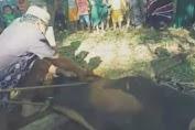 Puluhan Hewan Kurban Disembelih di Desa Sukarejo