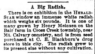 Henry Meinzen's big radish in Steubenville Herald-Star on October 15, 1898