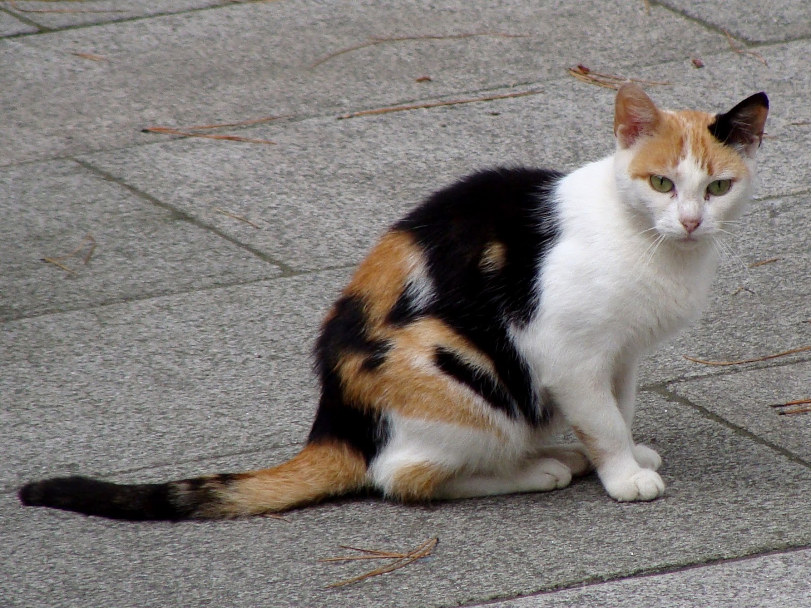 Black And White Spotted Cat Breed