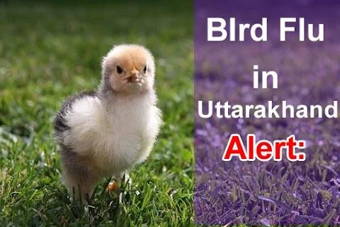 Bird Flu in Uttarakhand:- क्या होता हे बर्ड फ्लू? बरतें सावधानी
