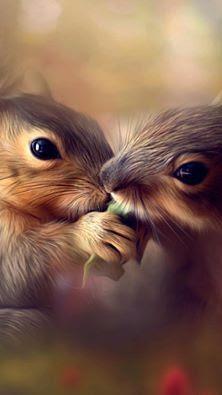 Famílias mais adoráveis do reino animal