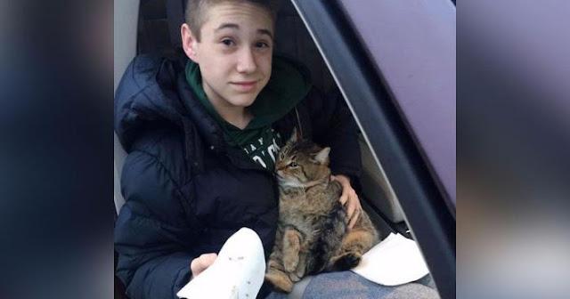 Из мчащегося по мосту фургона выбросили кота, подросток немедленно бросился на помощь животному…