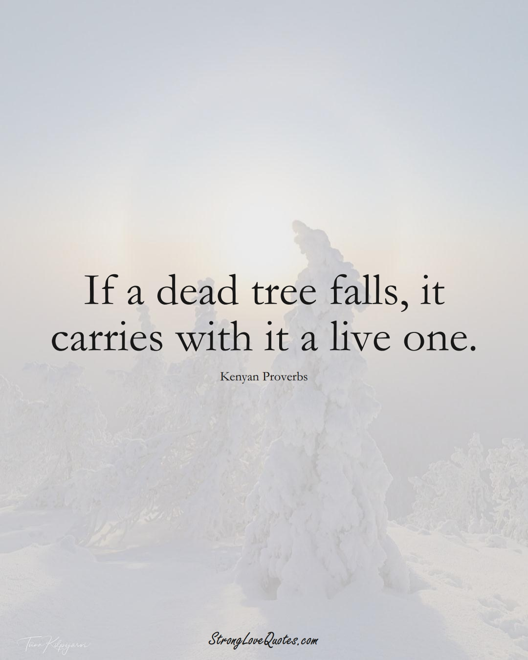 If a dead tree falls, it carries with it a live one. (Kenyan Sayings);  #AfricanSayings