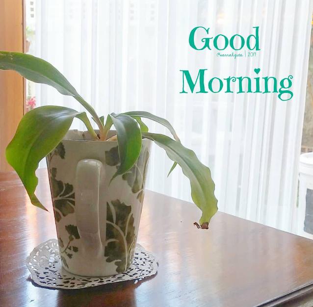pot bunga reuse