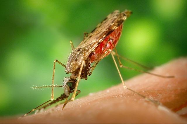 Pengetahuan Dan Sikap Masyarakat Tentang Pencegahan Malaria