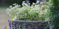 krukker i haven
