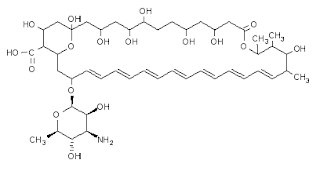 Amphotericin B (AmB) is a key agent in the management of serious systemic fungal infection