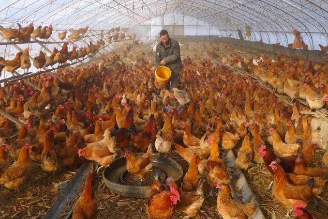 Belum Selesai dengan Corona, China Kini Diserang Wabah Flu Burung