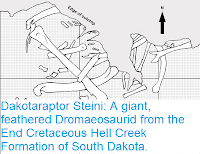 https://sciencythoughts.blogspot.com/2015/10/dakotaraptor-steini-giant-feathered.html
