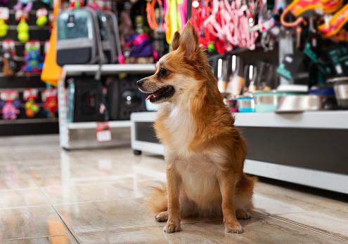 Starting online pet store Business