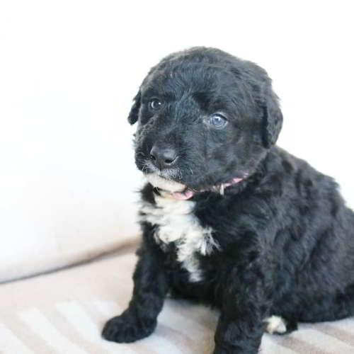 cachorra mestiza perro aguas