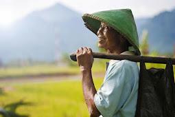 Puisi: Petani Tua di Lereng Tamiang (Aroel Diezoe)
