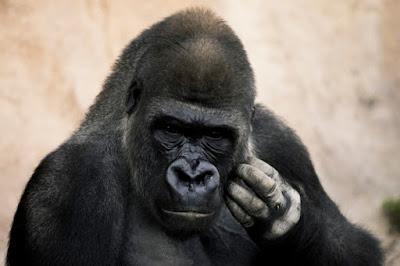 قصة قصيرة بالانجليزي سهلة غوريلا Gorilla