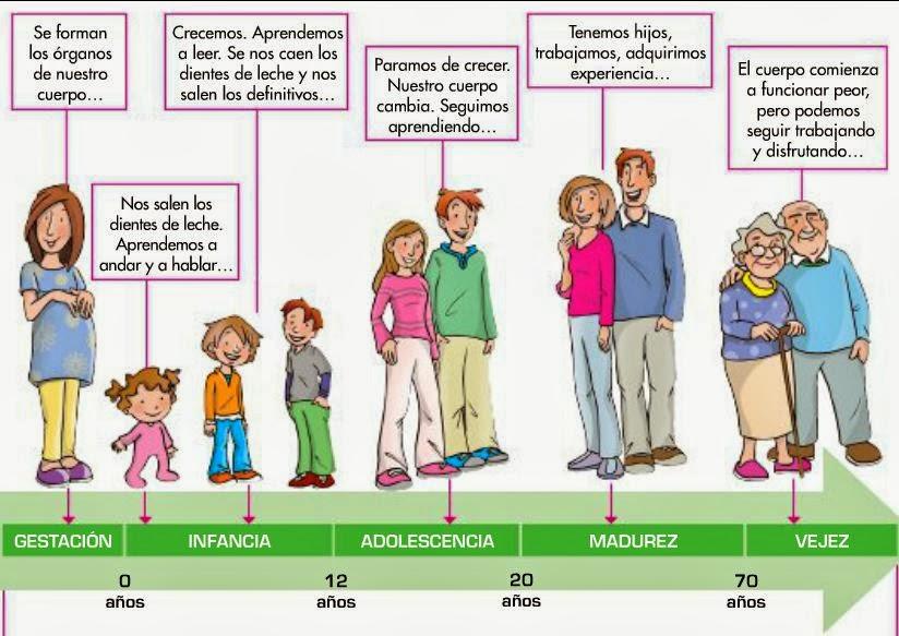 Resultado de imagen para las etapas del desarrollo humano