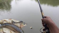 Hướng dẫn cách làm mồi nhậy câu cá trôi hiệu quả nhất