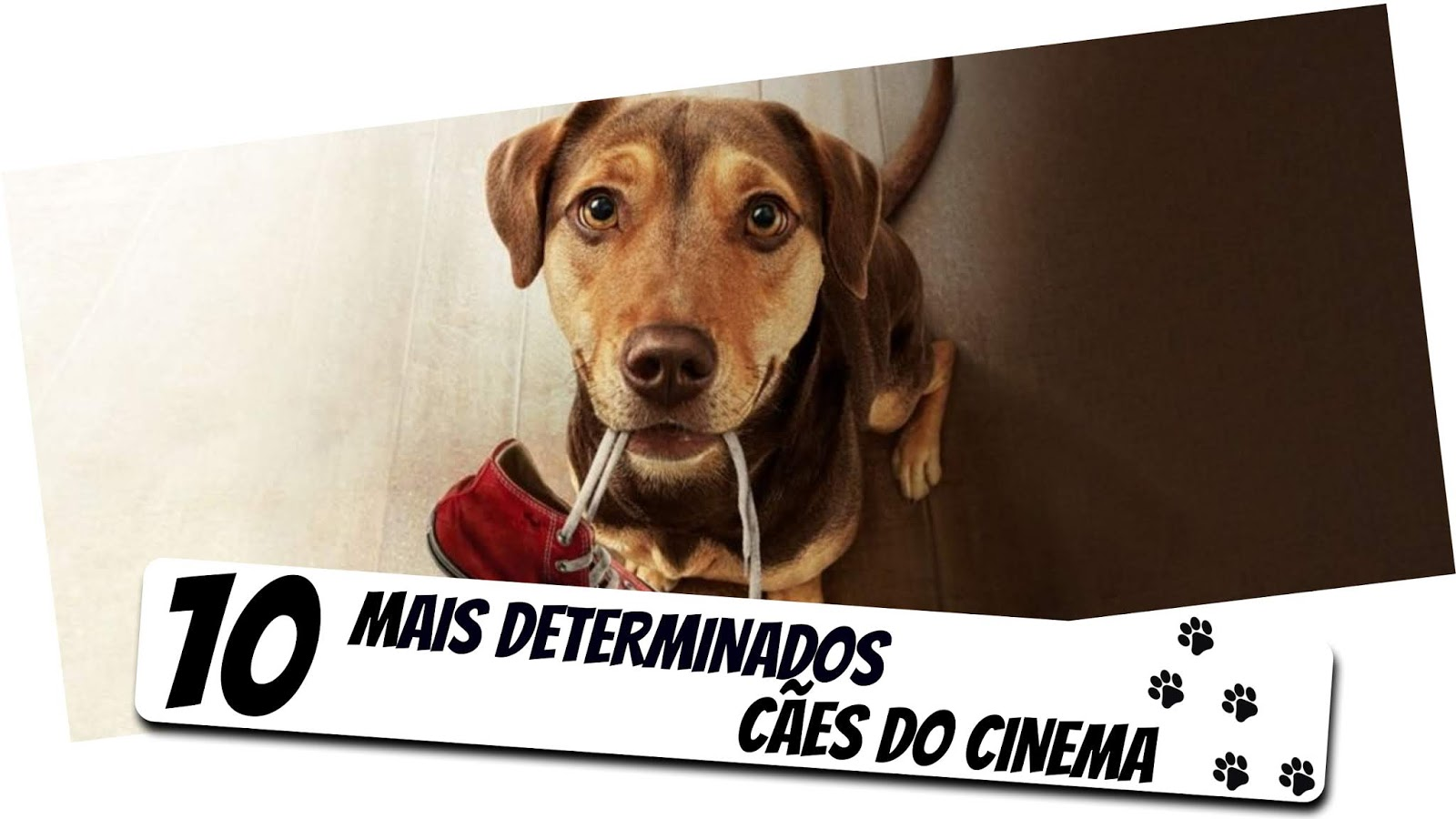 os-10-mais-determinados-caes-do-cinema