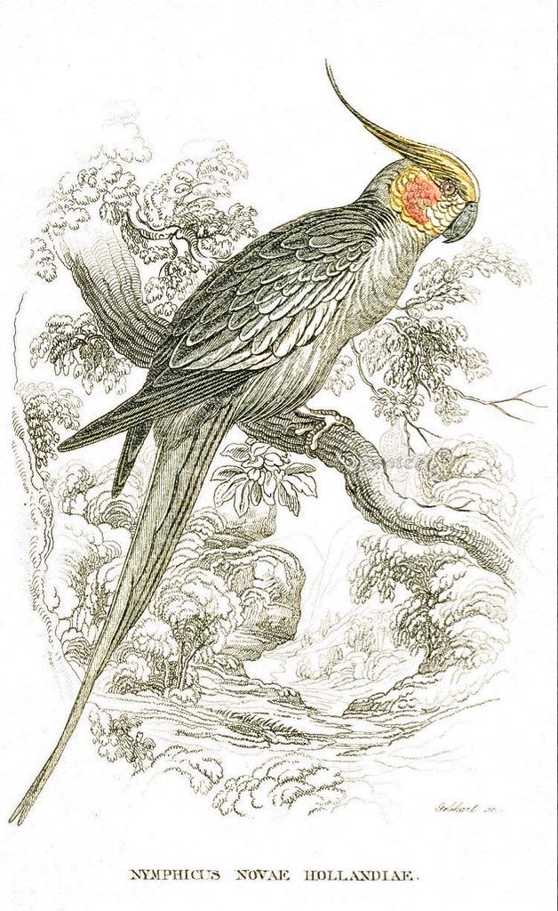 Aves em Pinturas
