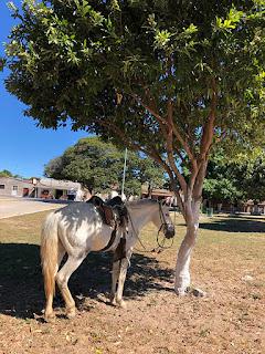 Foto Sylvia Leite - matéria Serra das Araras - BLOG LUGARES DE MEMÓRIA