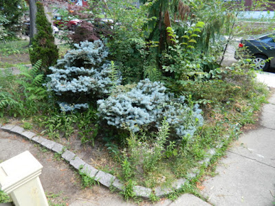 Leslieville Toronto front garden summer cleanup by Paul Jung Gardening Services before