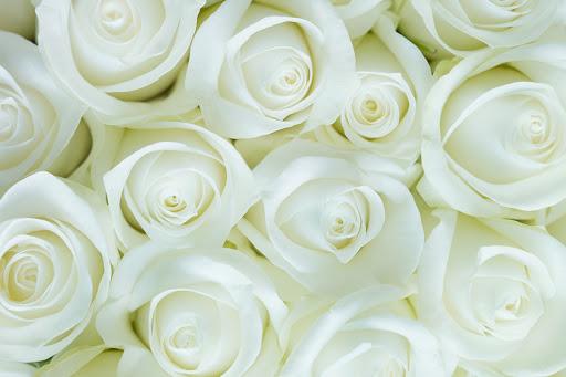 صور زهور ورق حائط 9