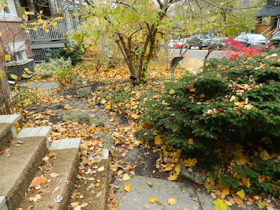 Toronto Fall Cleanup Riverdale Front Garden Before by Paul Jung Gardening Services--a Toronto Gardening Services Company