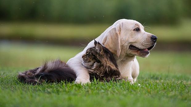 Xem xong chùm ảnh này, ai dám bảo rằng chó với mèo ghét nhau như kẻ thù nào?
