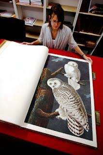 The-Birds-book