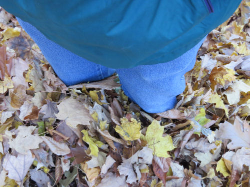 knee deep leaves