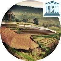 Jatiluwih-Rice-Terraces-Bali-Indonesia-Unesco