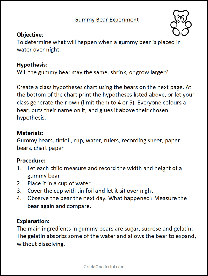 A gummy bear experiment for K-2 students. Includes 3 free sheets with directions and recording sheets. Bonus: A booklet of bear poems! #gradeonederful #experiments #gummybears #bearpoems