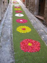 Sette Design Italian Flower Festival
