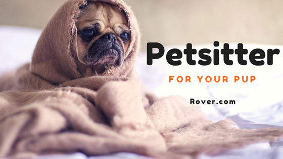 Petsitter for your pup