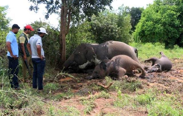 Empat Ekor Gajah Mati Dipanah Petir