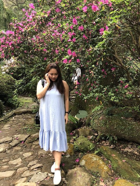 2018陽明山花季