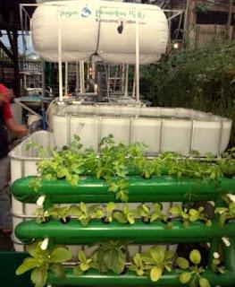 Tanaman Sayuran Hidroponik Hasil Residu Cair